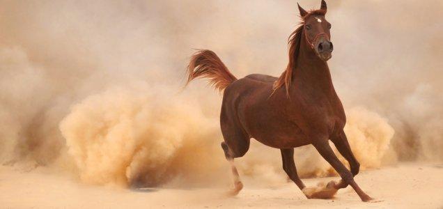 historique-cheval-maroc.jpg
