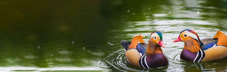 slider-watervogel-1.jpg